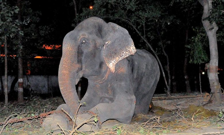 Photo of He Was Abused for 50 Years, But No One Expected the Elephant to Do This